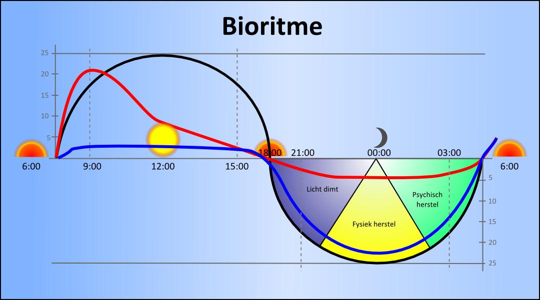 Bioritme voor balans en energie