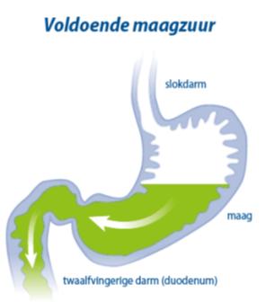 Maagzuur tekort vaak oorzaak brandend maagzuur